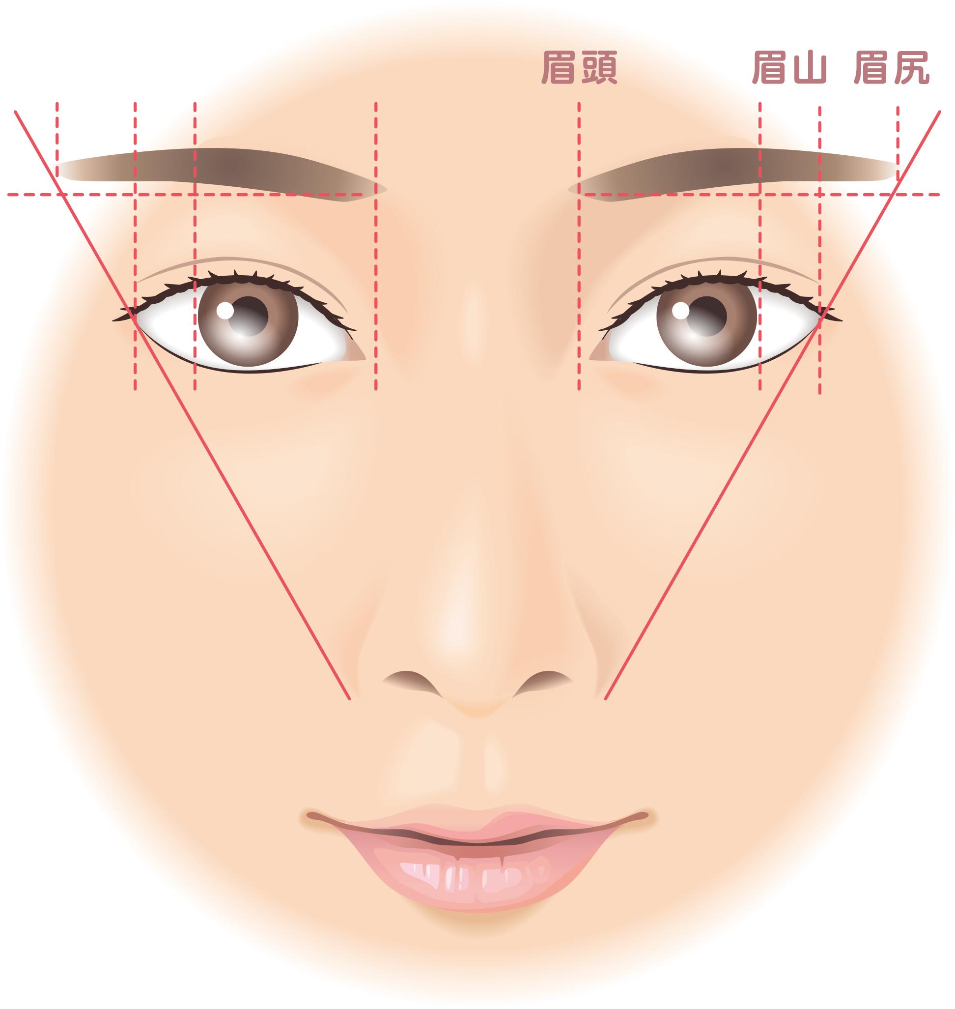眉の黄金比率を示したイラスト