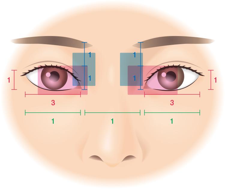 目の黄金比率
