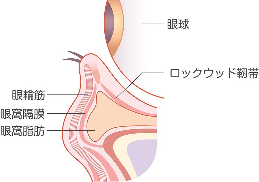 Augenstruktur
