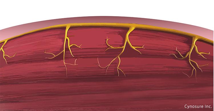 筋線維が効果的に成長