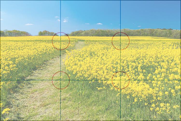三分割法の構図におさめた花畑の写真