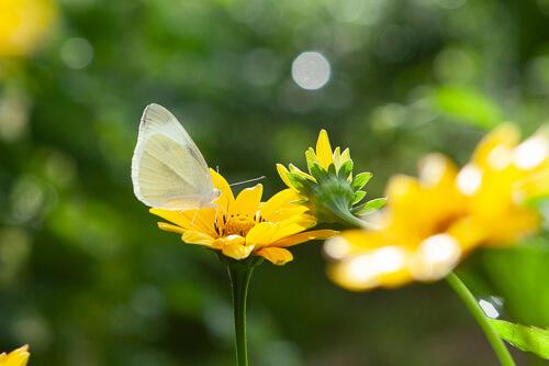 蝶と花の写真