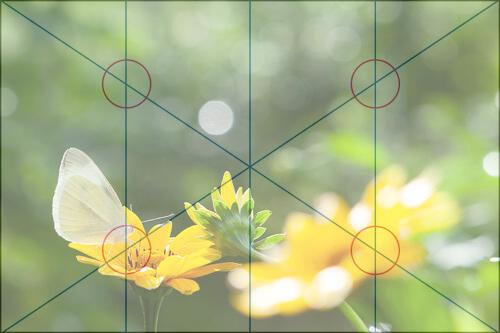 四分割法の構図におさめた花の写真