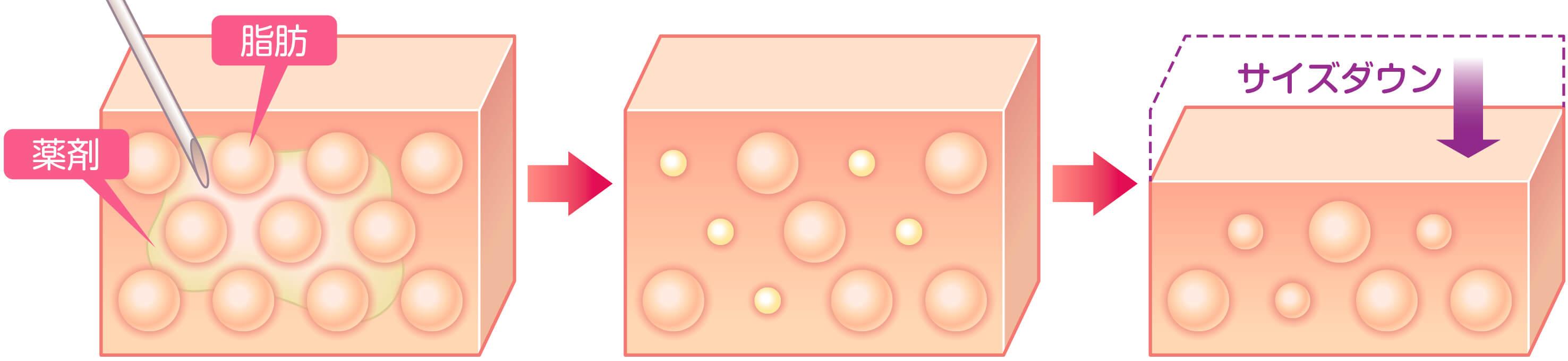 脂肪細胞に対するBNLS neoの作用のイラスト