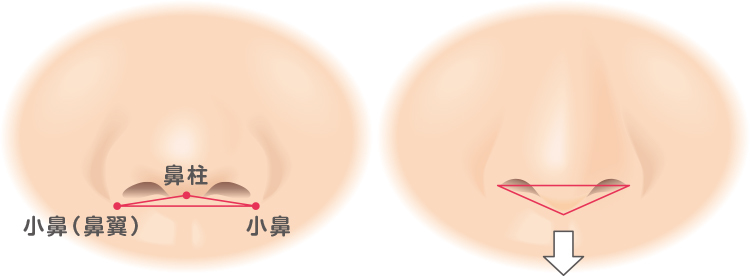 鼻柱の説明